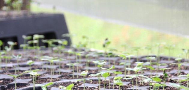 Tijucas incentiva o cultivo de maracujá no interior